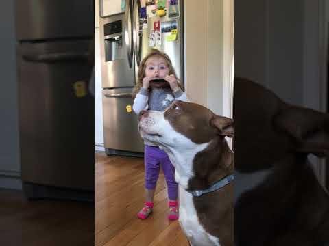 Harmonica Playing Toddler & Singing Dog