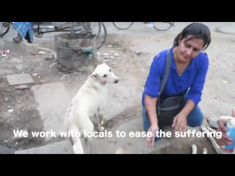 Street Dogs in India   Dogs of the Ganges Society