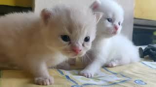 cute kitten compilation