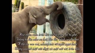 #09 Con voi Kìa nhìn xem trên kia có cái con chi to ghê)