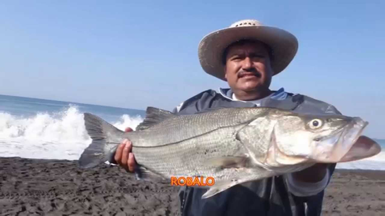 how to cook robalo fish