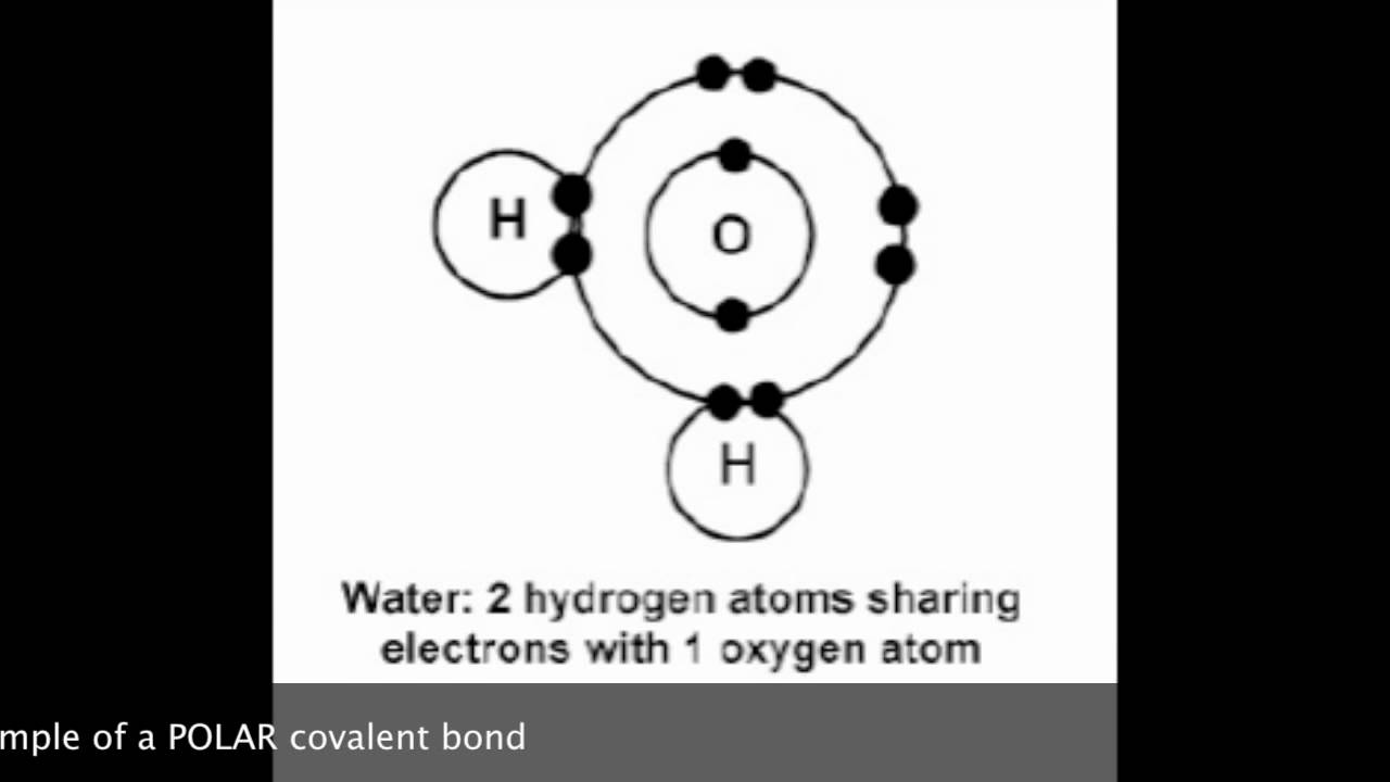 Polar Nonpolar Covalent Bonds Youtube