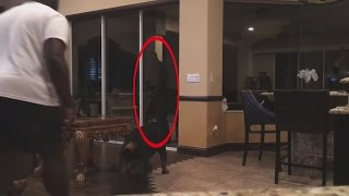 8 truly shocking dogs protecting from intruders caught on video