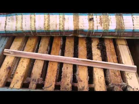 Вентиляция в ульях, для лучшей зимовки пчёл