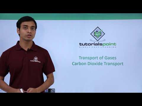 Transport of Gases - Carbon dioxide