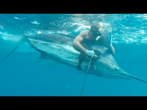 AMAIZING RECORD FOR Blue Marlin 220 Kg - OLD WORLD RECORD SPEARFISHING