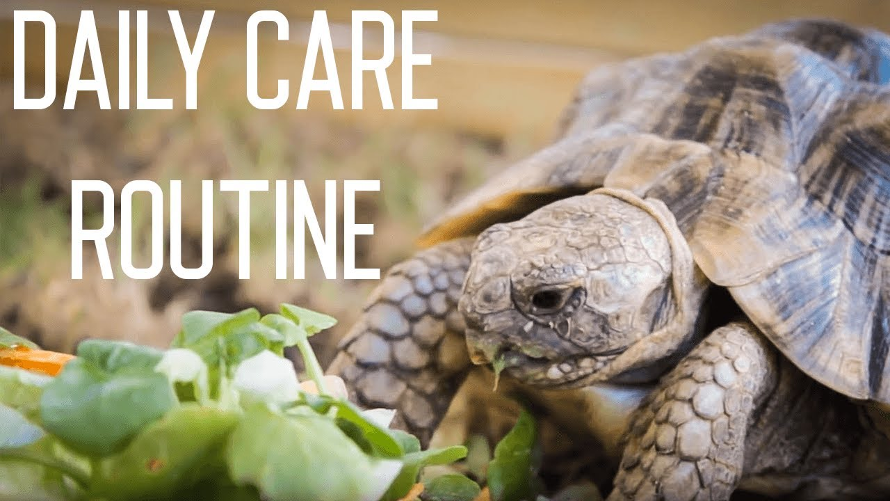 Download Tortoise Daily Care Routine