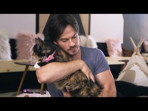 EXCLUSIVE: Watch Ian Somerhalder Play With Cute Kittens and Talk 'Kedi' With Director Ceyda Torun