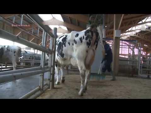 Francuska tehnologija proizvodnje mleka  -  nove stvari !