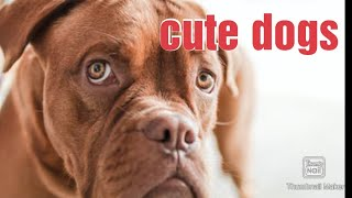 Cute Dogs||Dogs playing ||pet lovers||animal