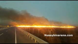 Nusaybin Suriye sınırında çıkan yangına korkuttu