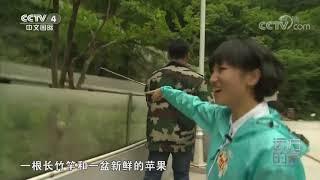 [远方的家]大好河山 探访秦岭熊猫家园  CCTV中文国际