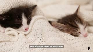International Cat Day 2019