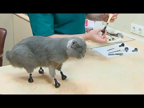 Эта кошка лишилась всех лап, но хирург из Сибири смог сделать невозможное…