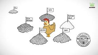 Eierhöfe: Was futtern die Legehennen?