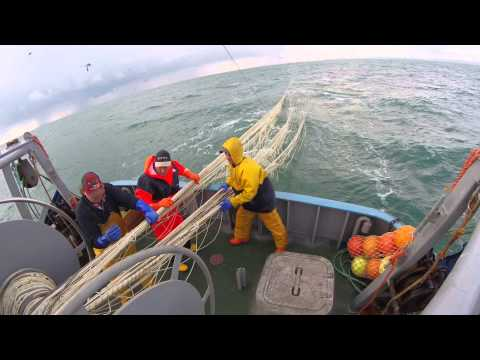Brixham Sprat Fishing