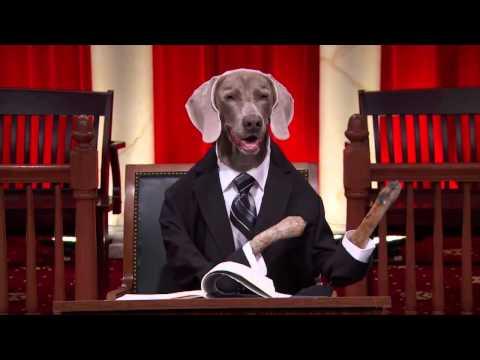 Supreme Court Dogs -  Kansas v. Nebraska #RealAnimalsFakePaws #PawJustice