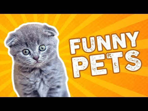 Funny Animal Videos Compilation 2018 - Cute kittens puppies dogs and cats - Try not to laugh!
