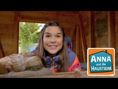 Achatschnecke Information Fur Kinder Anna Und Die Haustiere Youtube