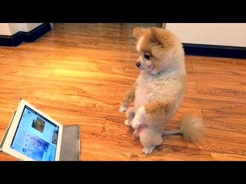 FUNNIEST VIRAL DOG VIDEOS 2018 😂😂 It's TIME TO LAUGH!