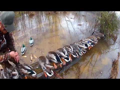 Duck Hunt Virginia North Carolina