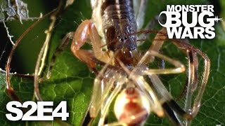 MONSTER BUG WARS | Mother of All Wars | S2E4