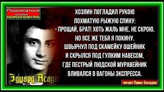 Э  Асадов   Стихи о рыжей дворняге   читает Павел Беседин