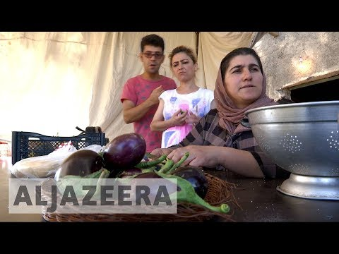 Syrian expat in Greece sets up a farm for refugees