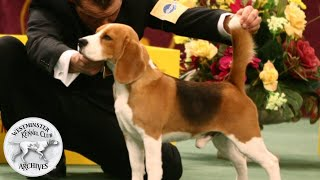 From the WKC Archives: Uno the Beagle