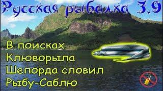 Русская рыбалка 3.9. Ловил Шепорда поймал Рыбу - саблю!
