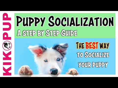 Puppy Socialization Guide - the BEST and SAFEST way!