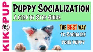 Puppy Socialization Guide  the BEST and SAFEST way!