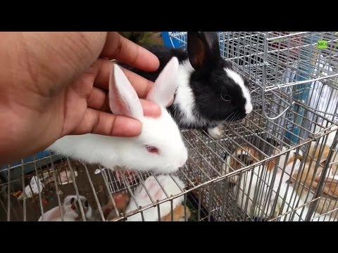 Incredible Cute Rabbit - In Pet Market