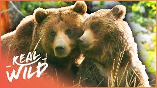 Scarface: The World's Most Famous Grizzly Bear (Bear Documentary) | Grizzly Country | Real Wild
