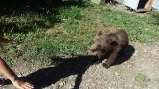 Отдых в вардане, фазенда, побег  от медвежонка(, 2016-07-06T09:59:02.000Z)
