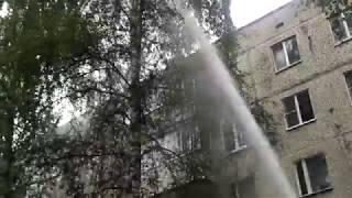 В Тверской области пожарные мощной струей из брандспойта пытались сбить с дерева кота