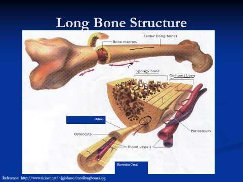 Basic Bone Healing