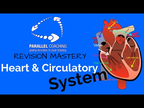 Module 1 The Heart and Circulatory System