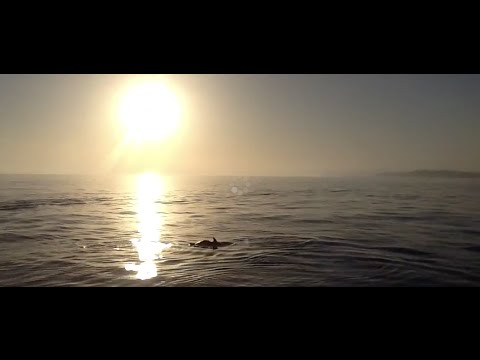 Dolphin in Saint tropez :  sailing vacations cruise at sunset