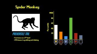 The Primate Tier List