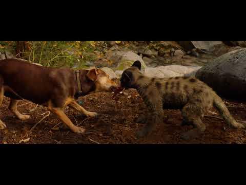 Pixomondo Creates The Purrfect Big Kitten In A Dog S Way Home Animation World Network