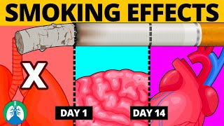 THIS Happens to Your Organs When You Quit Smoking ▶ BEWARE ❗