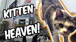 Video JAPAN TRIP 2018, DAY 2 - MY FIRST TIME AT A CAT CAFE! download MP3, 3GP, MP4, WEBM, AVI, FLV September 2018