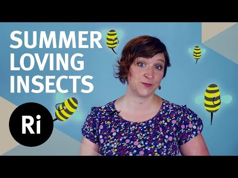 Why Insects Love Summer – Flight, Fights and Booze
