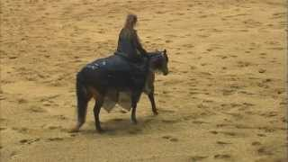 Gambar cover 2011 Congress Champion-Stacy Westfall, Freestyle Reining Bridleless