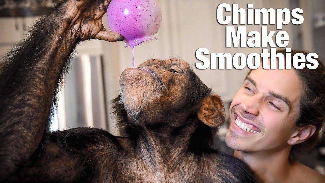 Chimps Make Smoothies | Myrtle Beach Safari