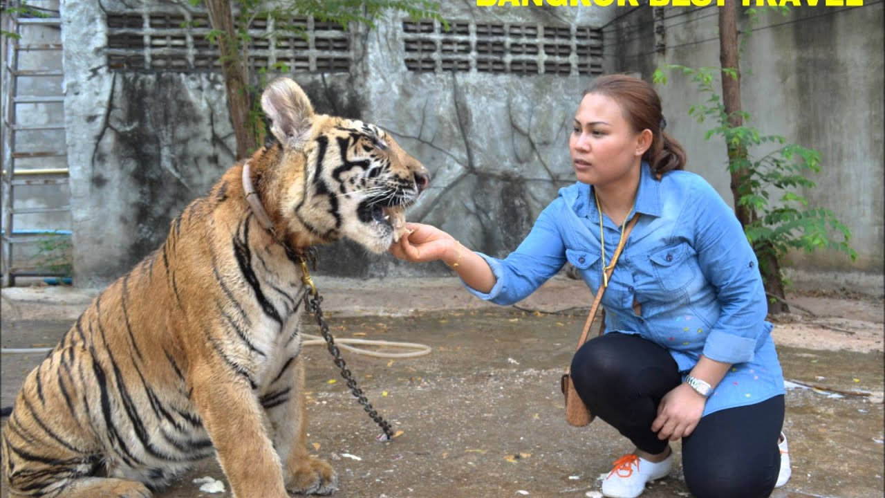 Tiger Temple Morning Tour Thailand by Bangkok Best Travel ...