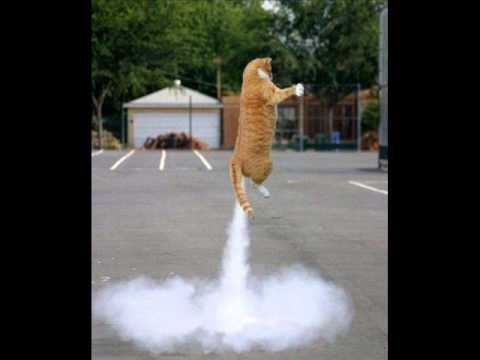 可愛い猫の壁紙画像集 - NAVER まとめ