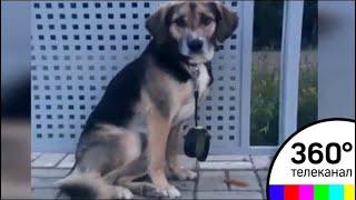 Хозяев собаки, которую выкинули из электрички, ищут в Подмосковье