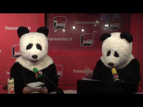 [Scènes bonus] Deux pandas font irruption en studio pour libérer Nicolas Hulot !